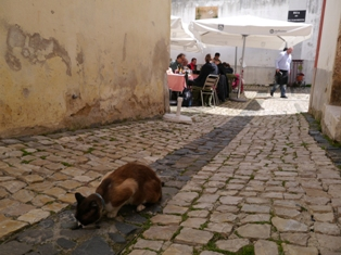 cat in Lisbon.JPG