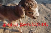 ディナジプールで出会った生まれて2日の子ヤギ。