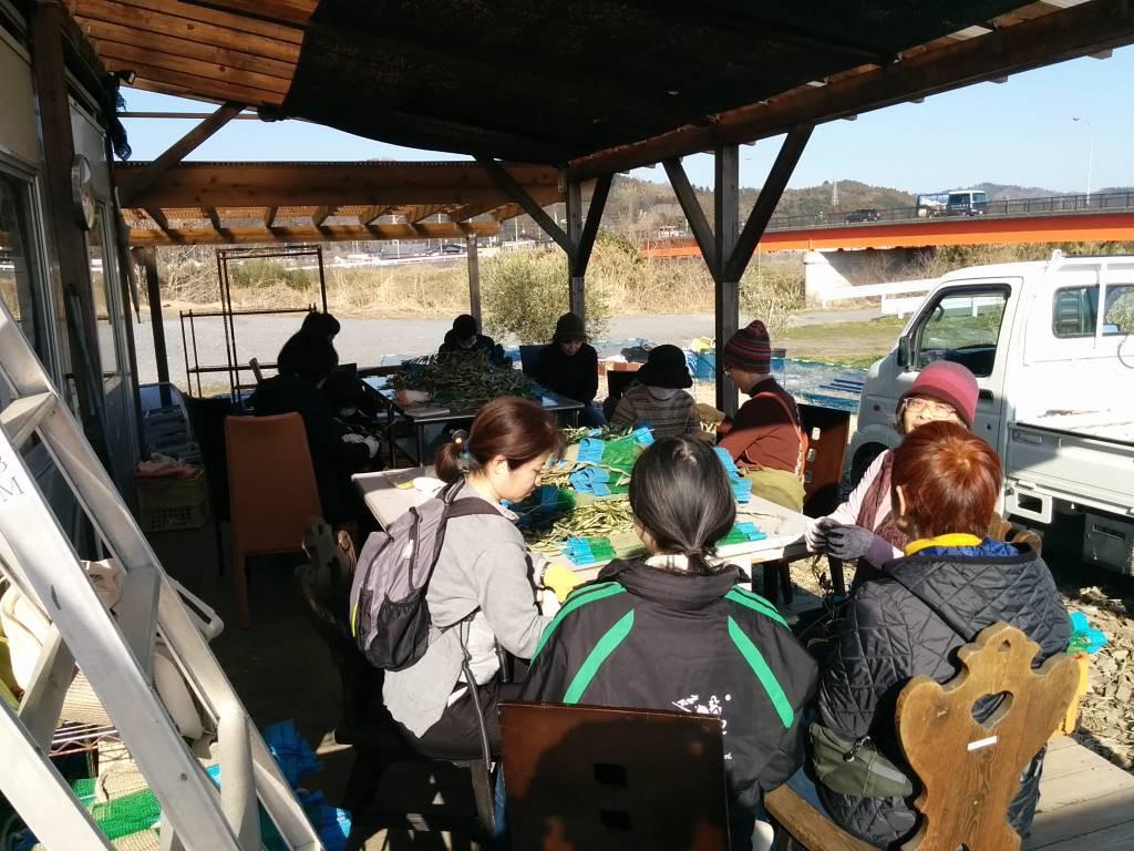 オリーブ農園で作業を手伝うツアー参加者