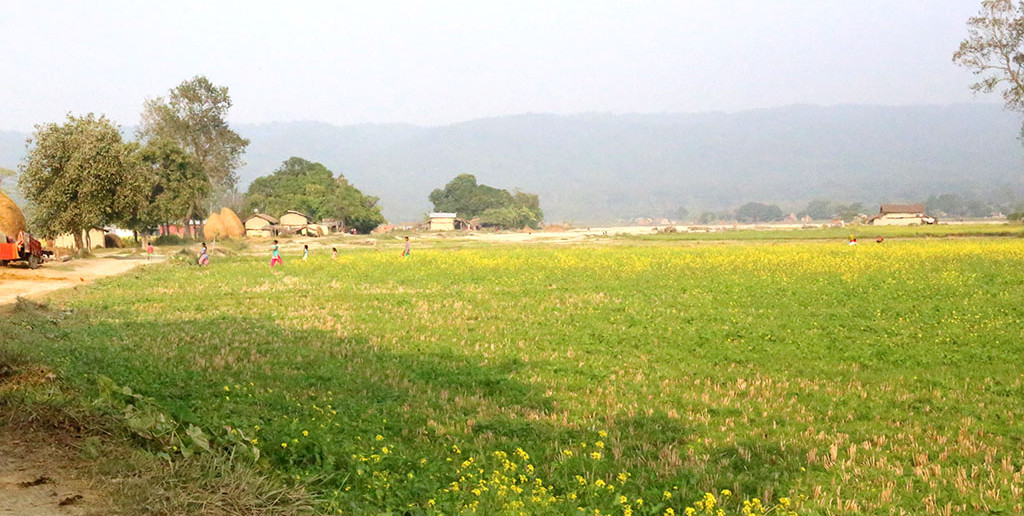 前回の12月開催のツアーでは、ちょうど菜の花が満開の季節でした。