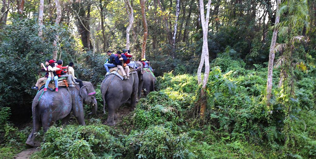 前回のスタディツアーのようす。 ゾウに振り落とされそうになりながら、1時間以上もジャングルを歩き回ります!