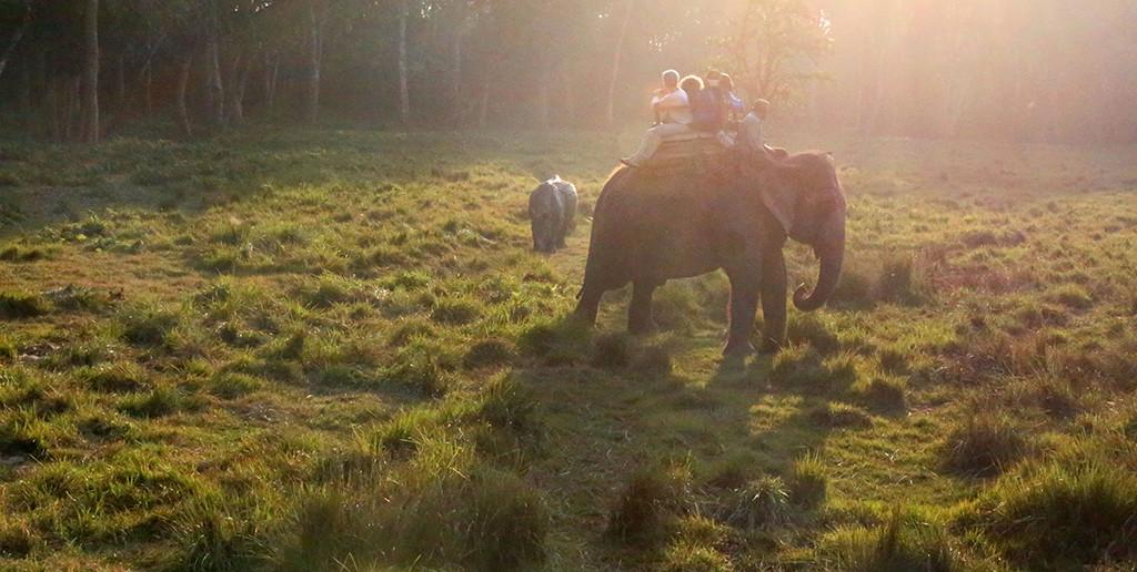 前回のスタディツアーのようす。ゾウに乗りながらさまざまな野生動物に出会えます。