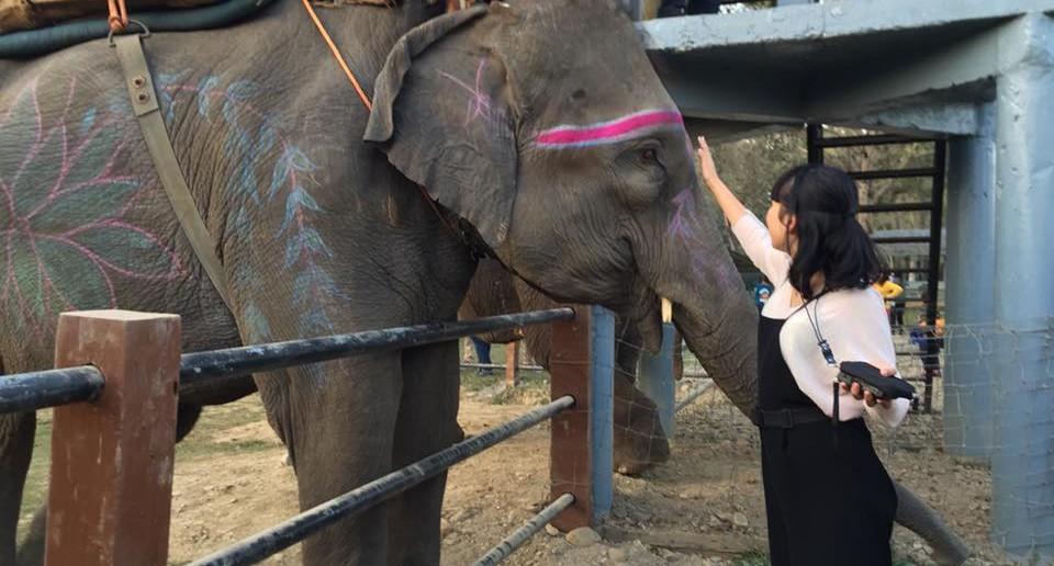 前回のスタディツアーのようす。ゾウに触れて、写真も一緒に撮れます。