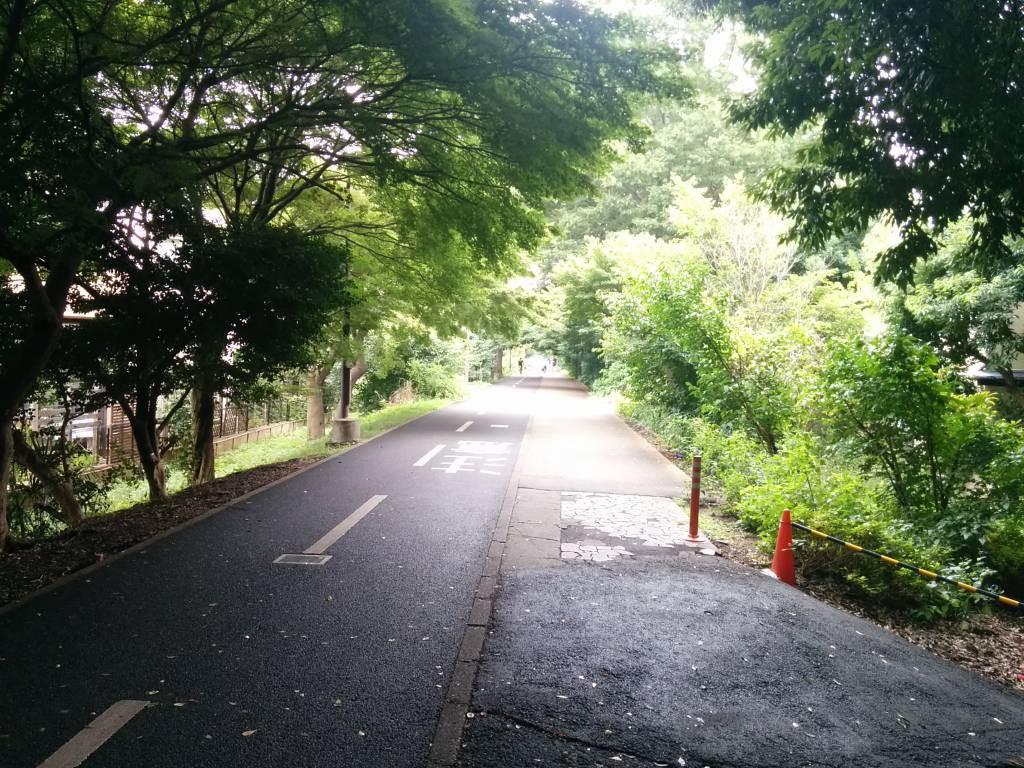 トレーニングで走っているサイクリングロード。朝は気持ちいいです。