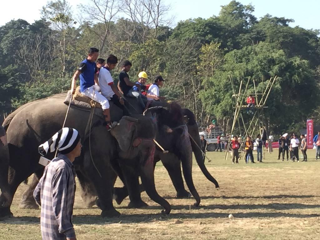 スポーツのポロで遊ぶ象
