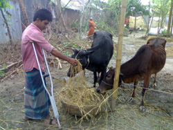 家計のためにとローンで買った牛を育てています。市場では高額な取引きができています