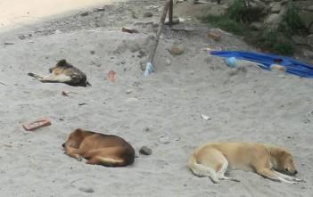 人の少なさにも慣れてきた野良犬たち