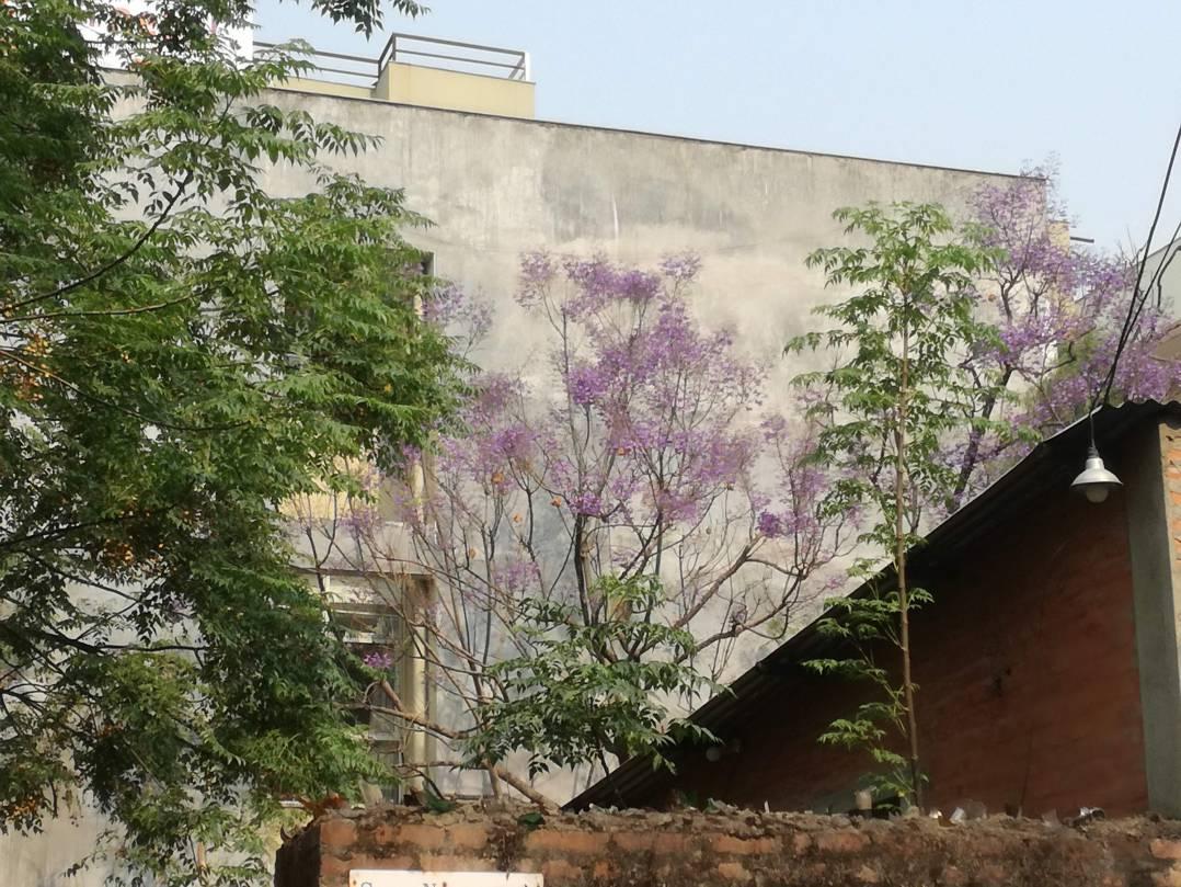 紫の花がジャガランタ